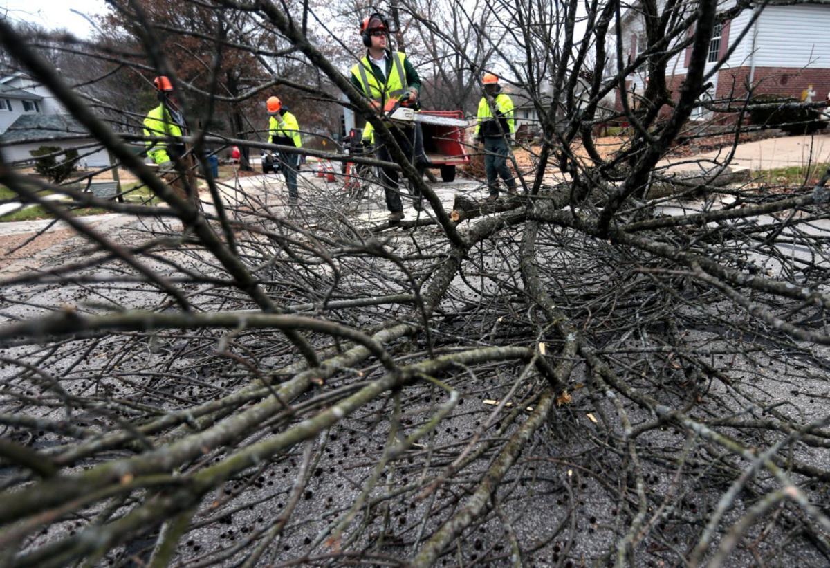 Ballwin removes ash trees