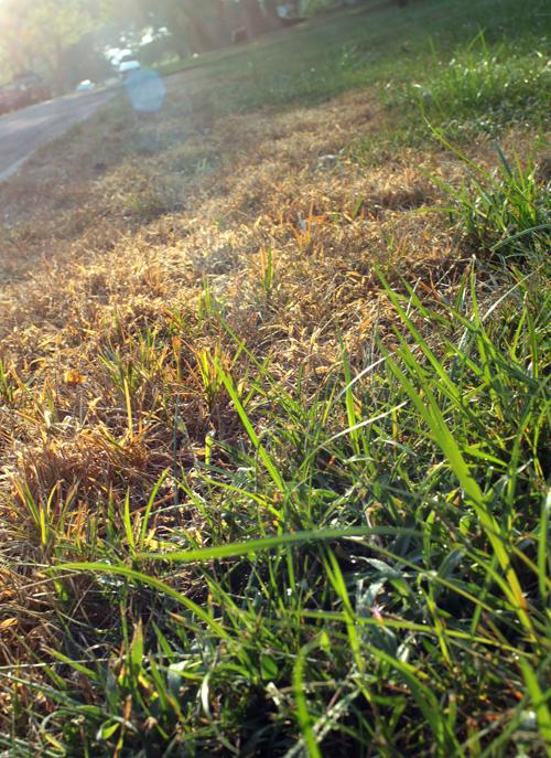Act Now To Repair Your Lawn From Summer Damage Home Garden