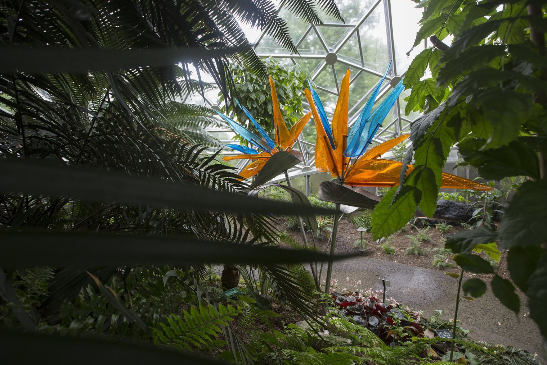 Marvelous Glass Exhibit Opens At Missouri Botanical Garden