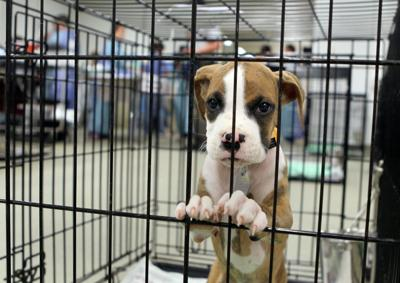 Editorial: Short takes on puppy mills, Arkansas' race to