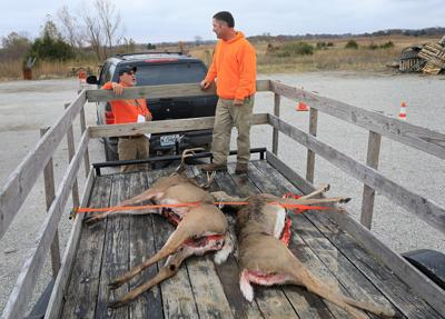 Missouri screens deer shot by hunters for chronic wasting disease