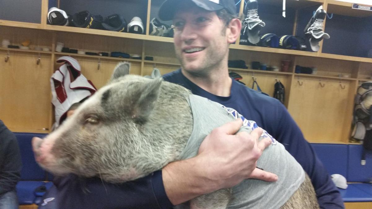 Meet a new blues mascot piggy smalls st louis blues stltoday blues captain david backes holds piggy smalls in the locker room on friday jeremy rutherford photo m4hsunfo