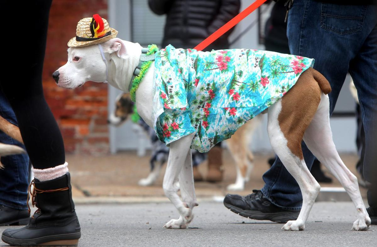 Dress up your pet and help another: Purina Pet Parade benefits area's largest no-kill shelter