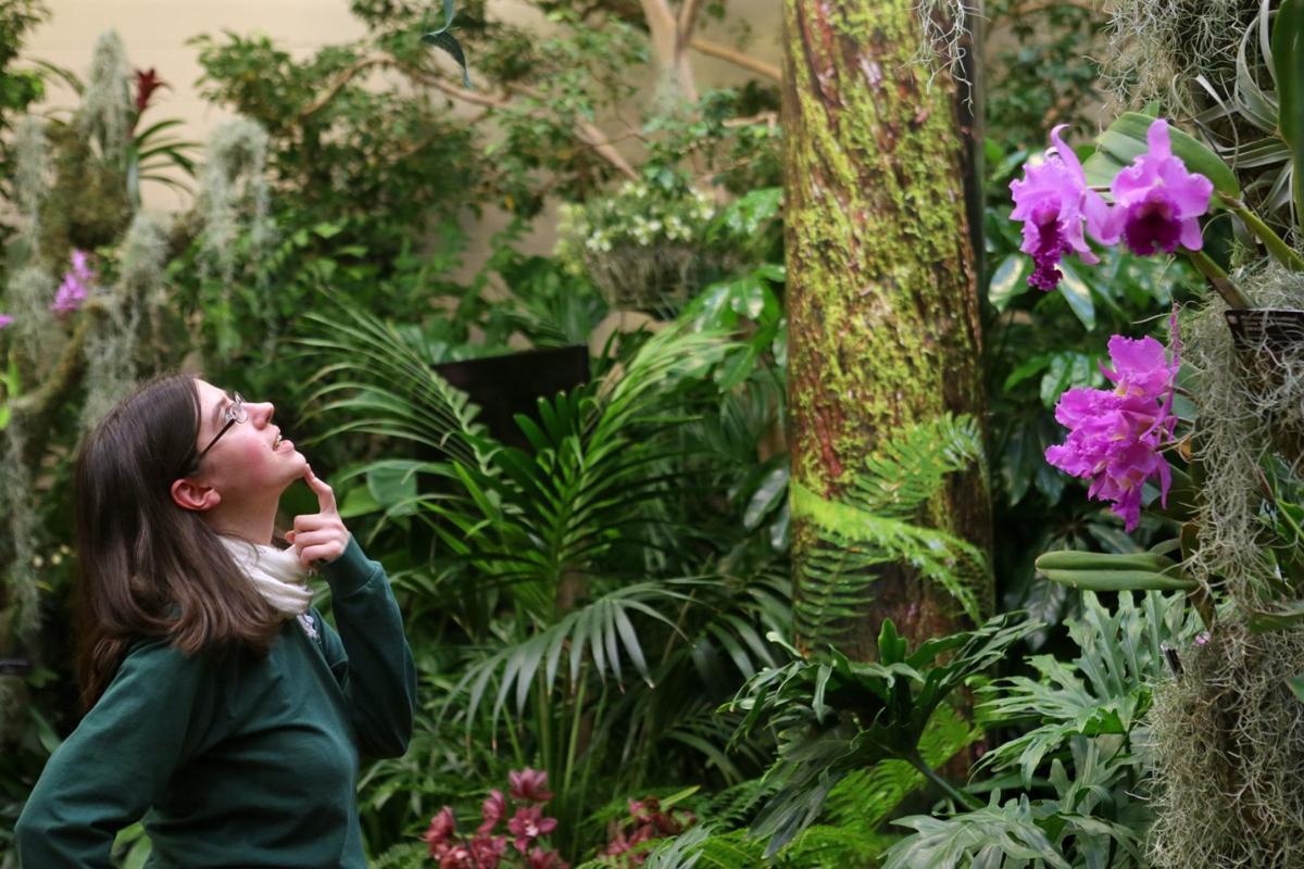 Missouri botanical garden raising admission fees in 2017 - Orchid show missouri botanical garden ...