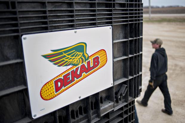Monsanto Co. DeKalb brand seed corn
