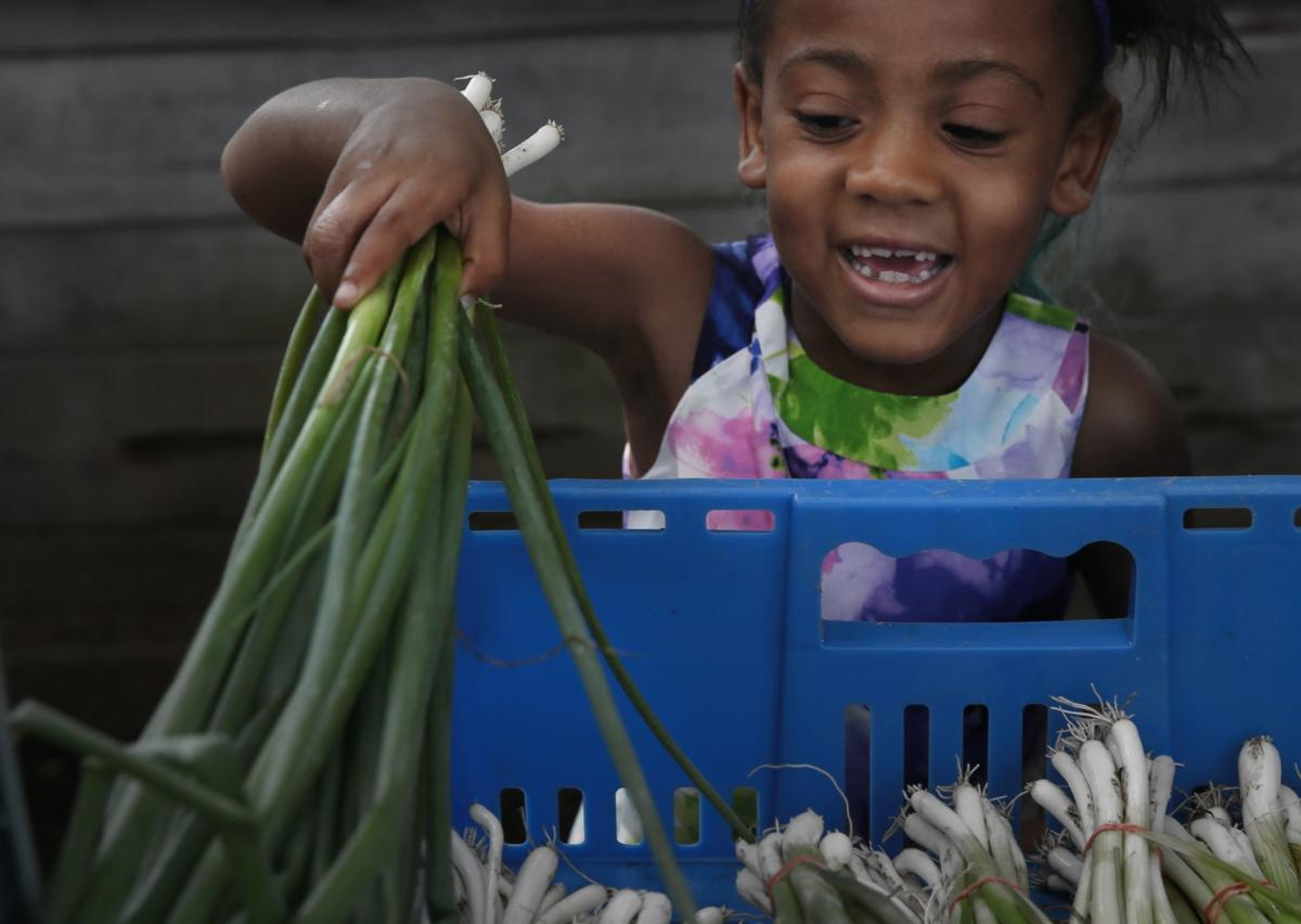 Seeds of Hope Farm in Spanish Lake offers income-tiered CSA shares