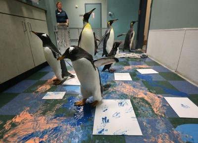 """Penguins """"paint"""" at the Zoo"""