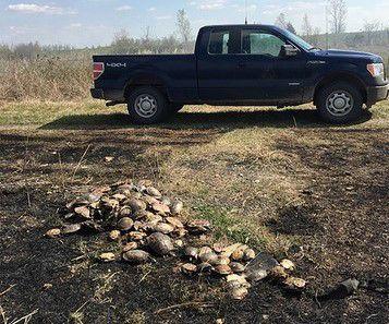 Dead turtles outside Hayti, Mo.