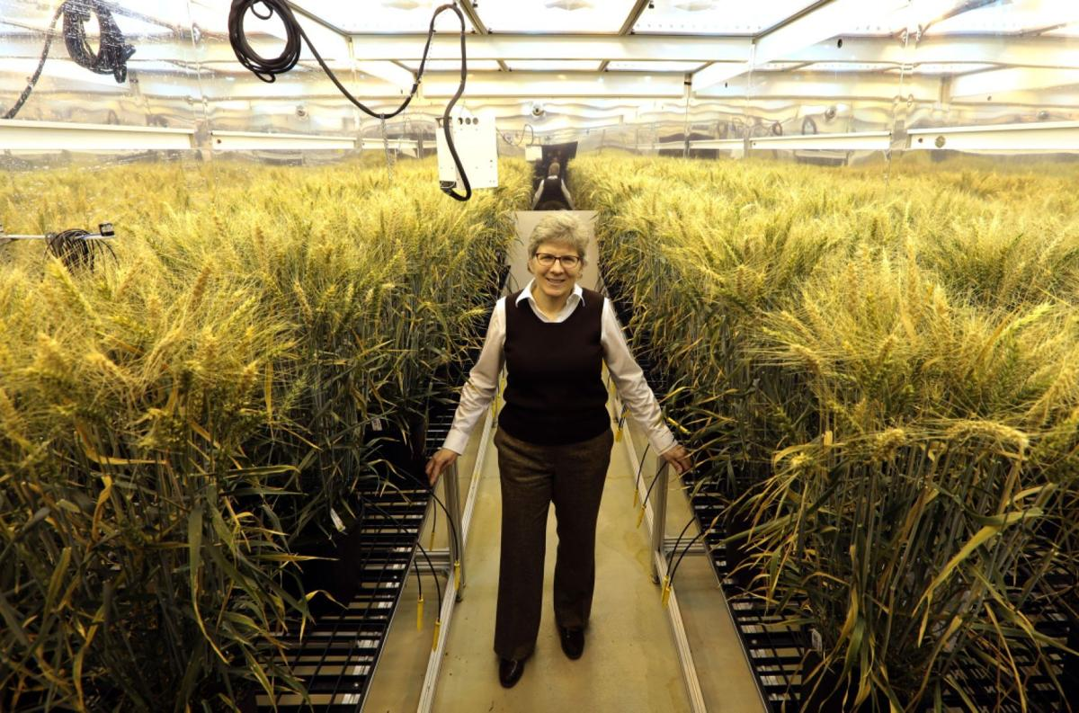 Claire CaJacob, Global Wheat Technology Lead