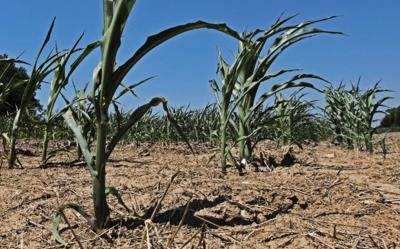 Drought conditions threaten corn crop