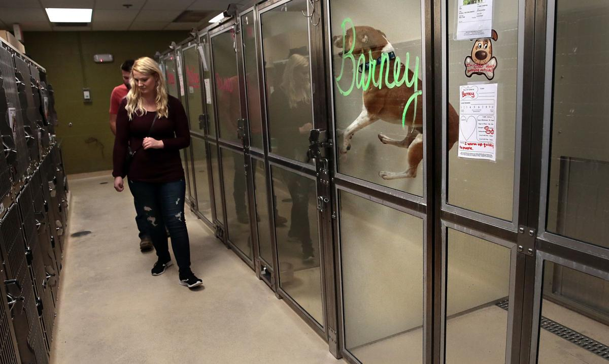 County employees walk dogs, clean cages at animal shelter while volunteers reapply for jobs