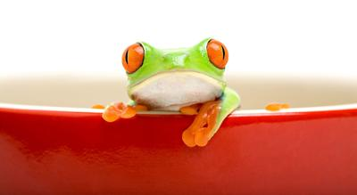 The Proverbial Frog