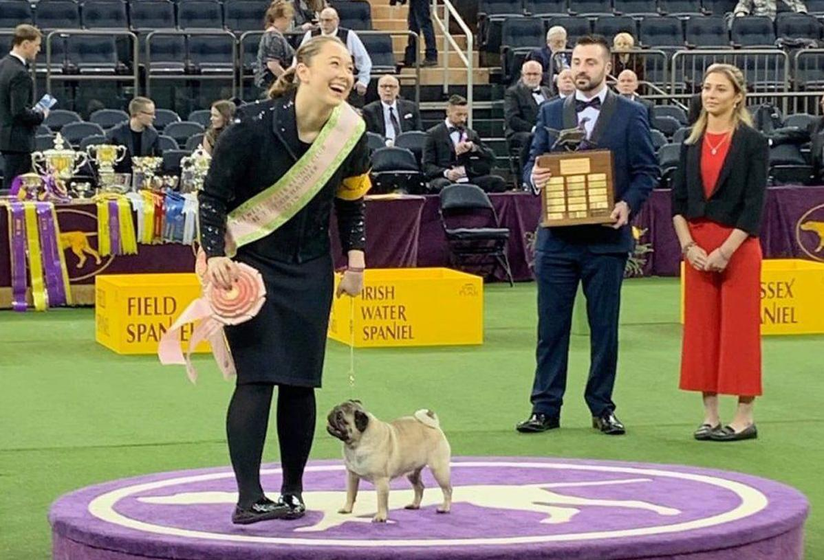 STL teen named top junior handler at Westminster dog show