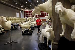 The 'Olympics of taxidermy' comes to Missouri