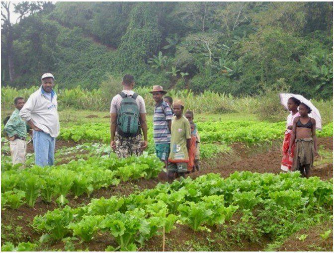 Vegetable garden in Madagascar