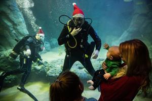 長ライン、クリスマス-ツリーイベントの多くの魚のマークセントルイス水族館開業