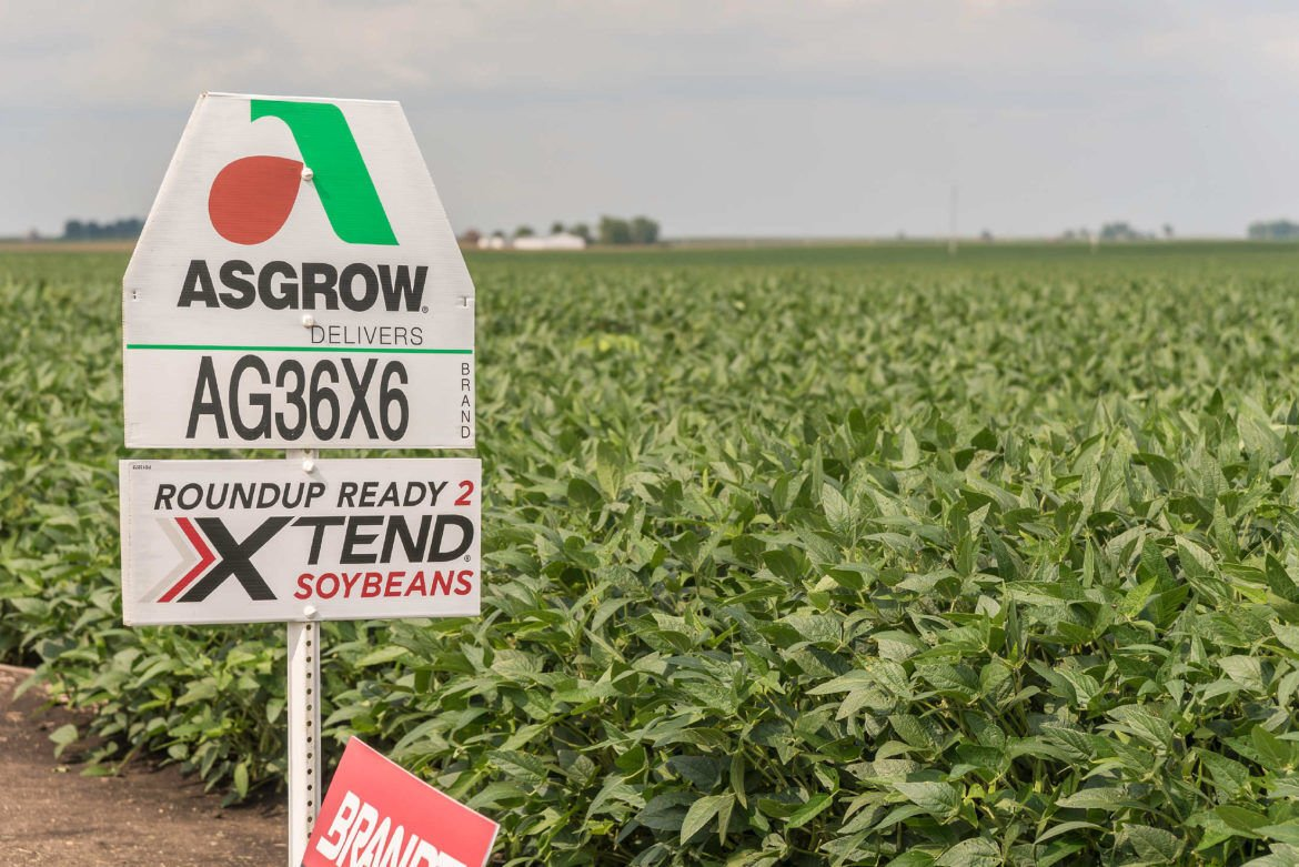 Dicamba-resistant soybeans in rural McLean County