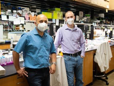 Coronavirus U.S. variant identified by SIU