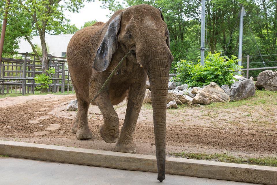 Mickey the elephant