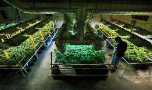 Μιζούρι προετοιμάζεις για νομικές προκλήσεις στην ανάπτυξη της ιατρικής μαριχουάνας