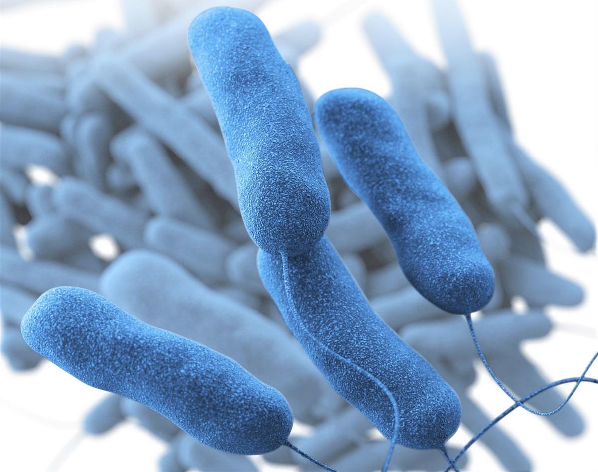 Legionella bacterium