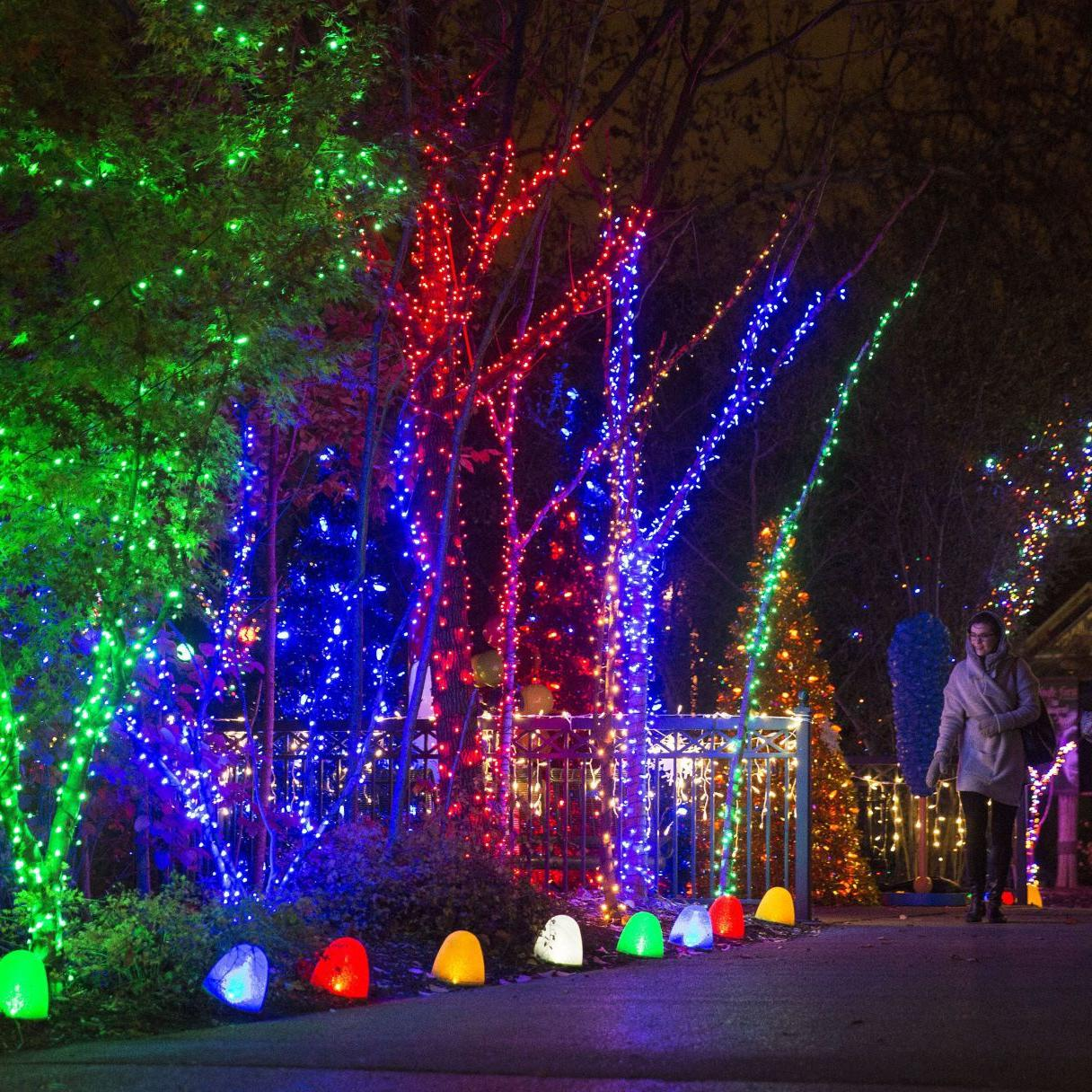 Rolla Christmas Lights Dec 2021 St Louis Zoo In The Running For Best Holiday Lights Joe S St Louis Stltoday Com