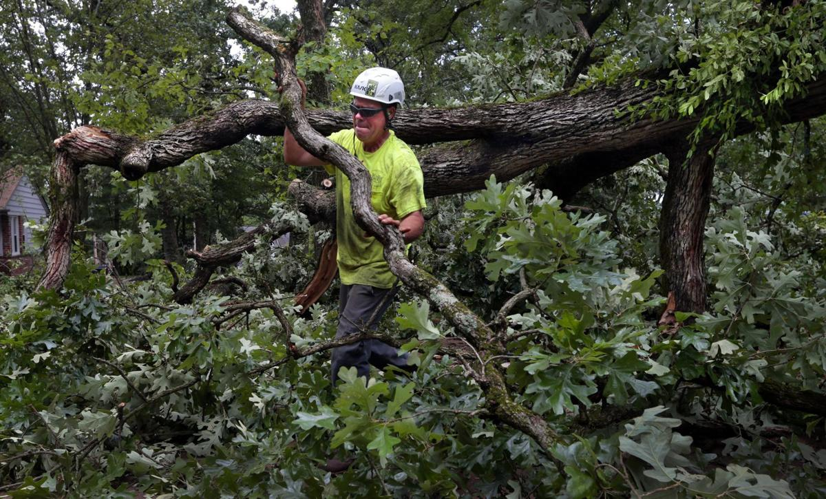 Trees down across the region following overnight storms