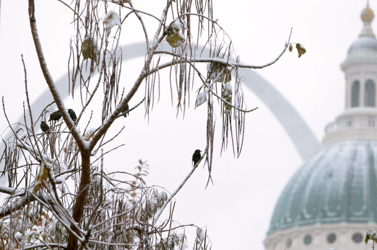 Snow falls in St. Louis