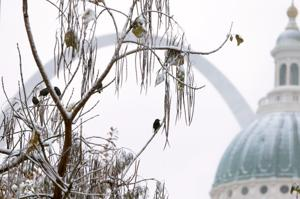 At 11 degrees this morning, St. Louis set new record cold for this date