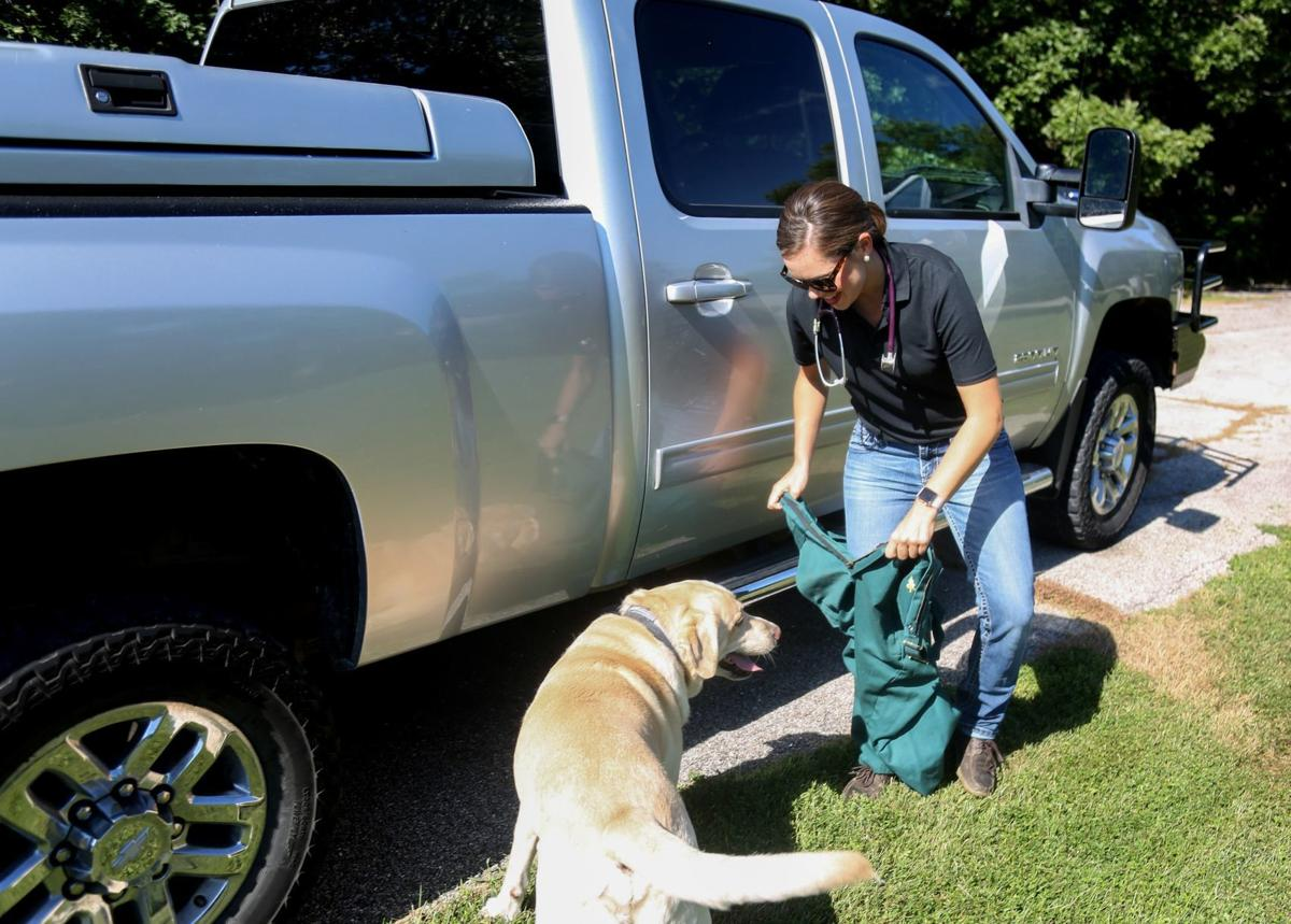 Large animal veterinarians