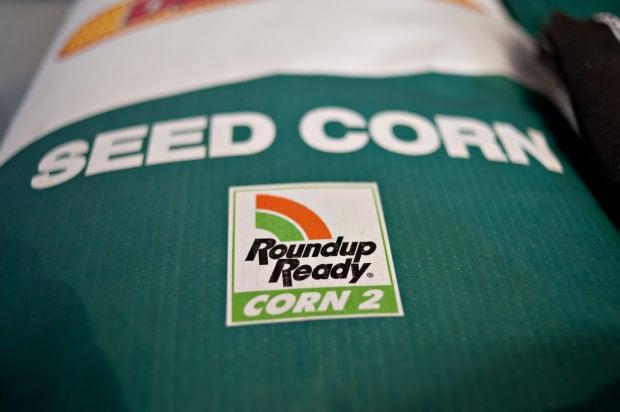Roundup Ready corn