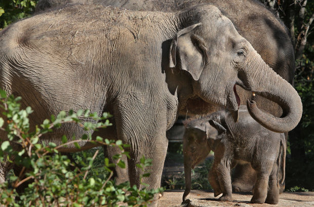Elephant health is a focus of new study