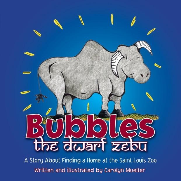 'Bubbles the Dwarf Zebu'