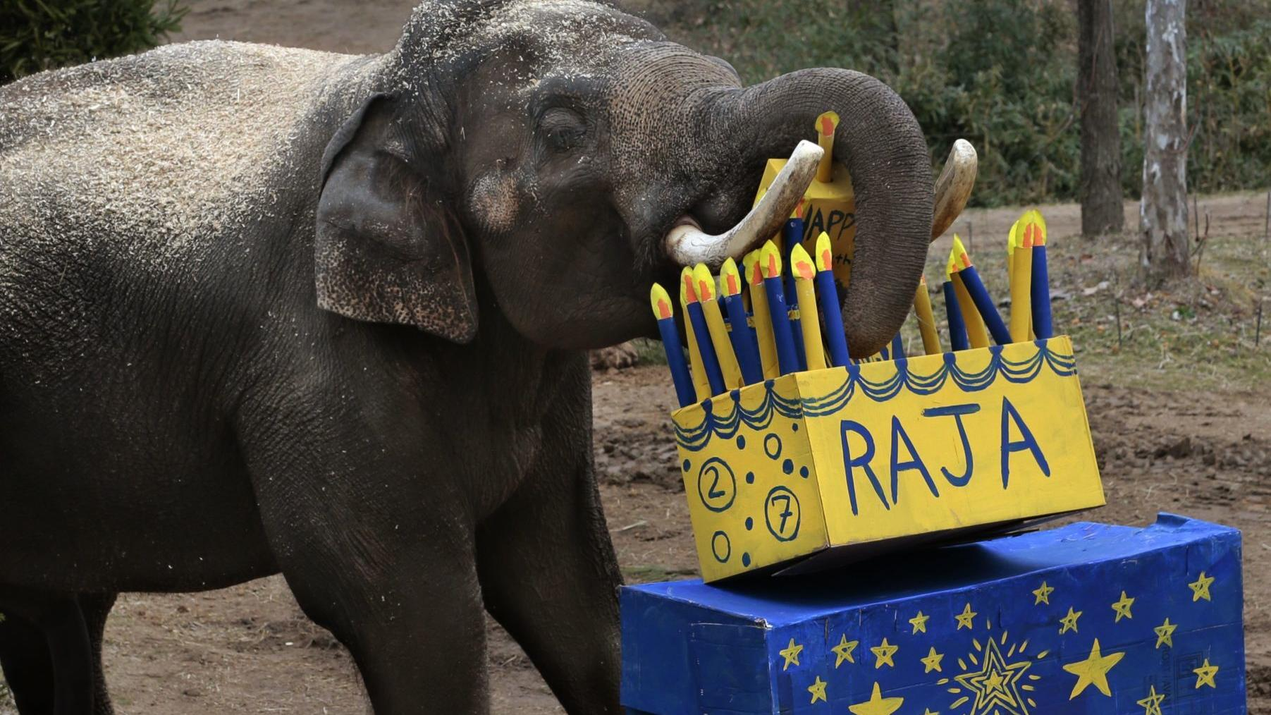 Best Bets: An elephant's virtual birthday party and a handful of New Year's Eve events