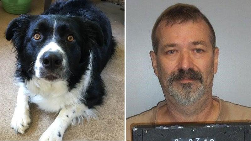 Crestwood man stabs and kills dog that runs onto his