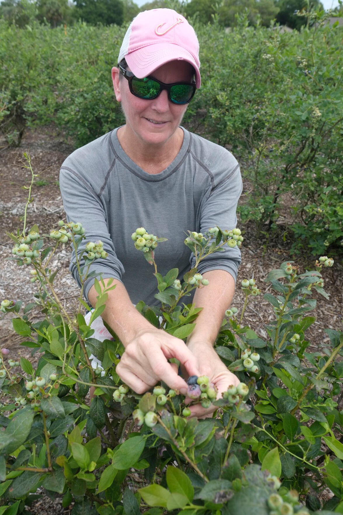 PA-Blueberries2-042121.JPG