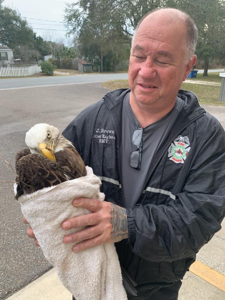 PA01133 Eagle.jpg