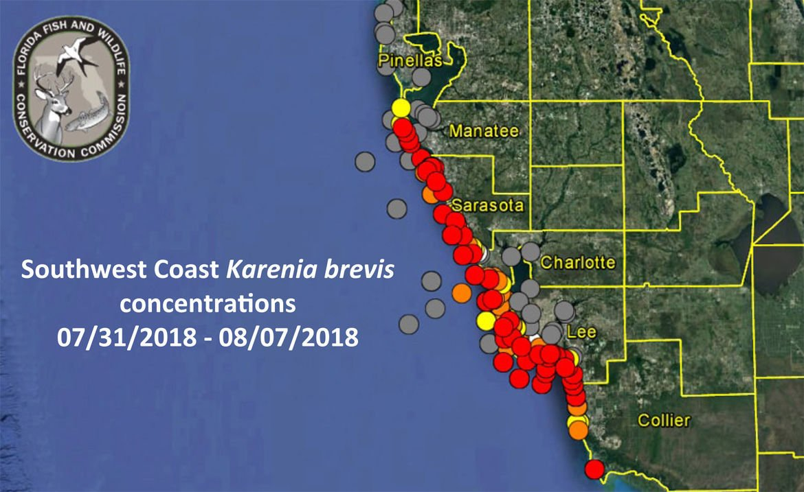 No red tide on Pinellas County beaches as of Aug. 8