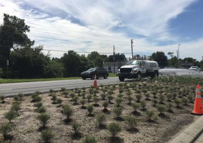 U.S. 19 gets some love with new landscaping