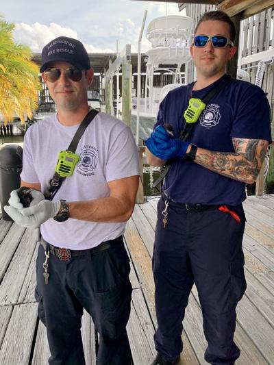 Palm Harbor firefighters save baby birds