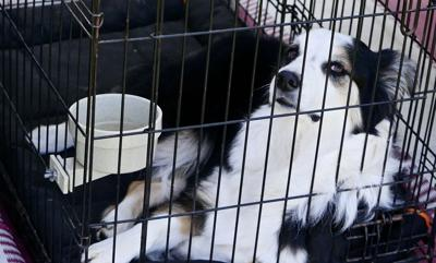 Pasco passes ban on retail sale of cats and dogs