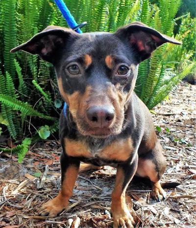 Pinellas Pet of the Week