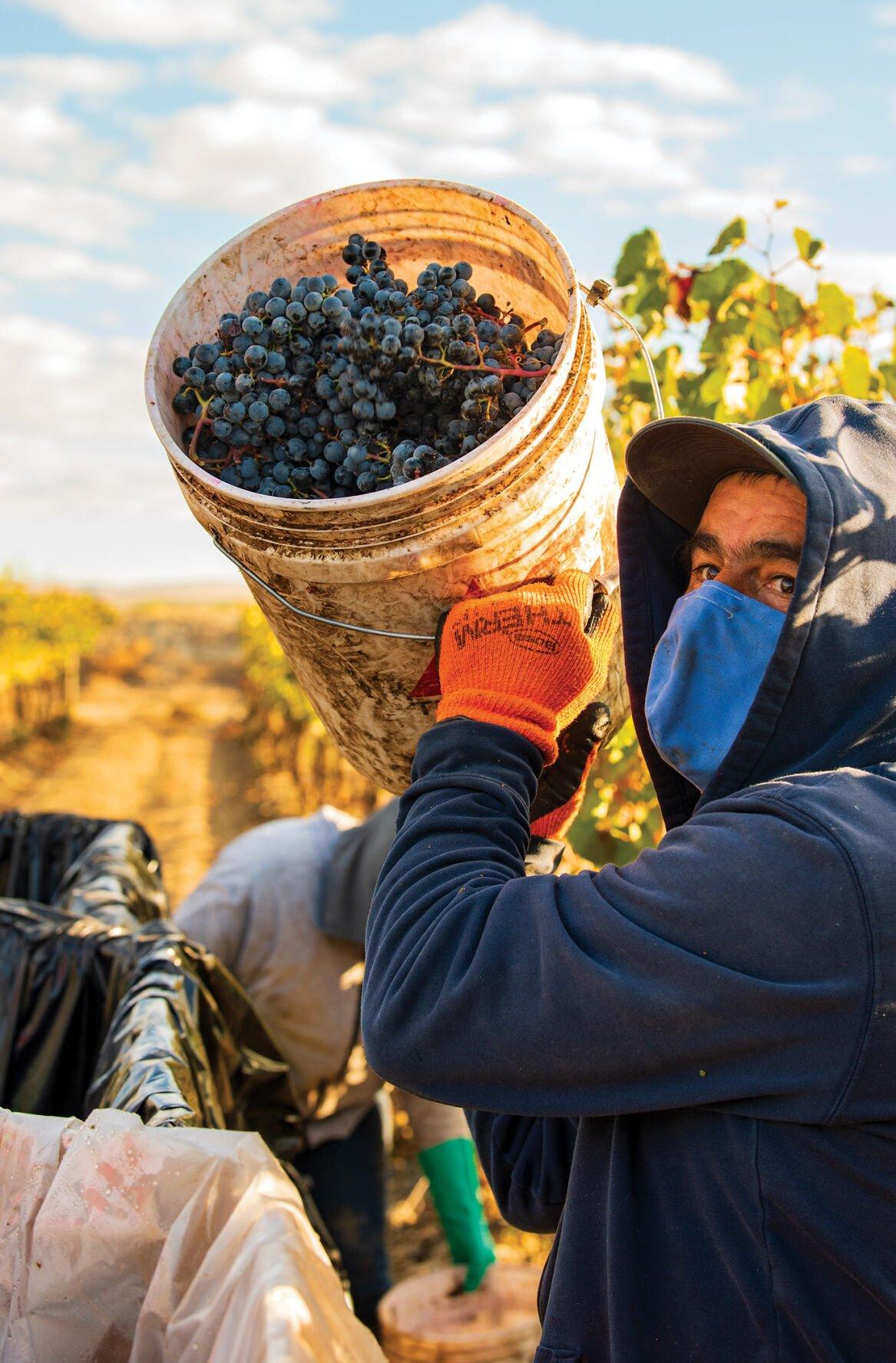 10_28_Airfield Estate Winery_Hand Harvest_Bucket_COPY_PWS2821.jpg