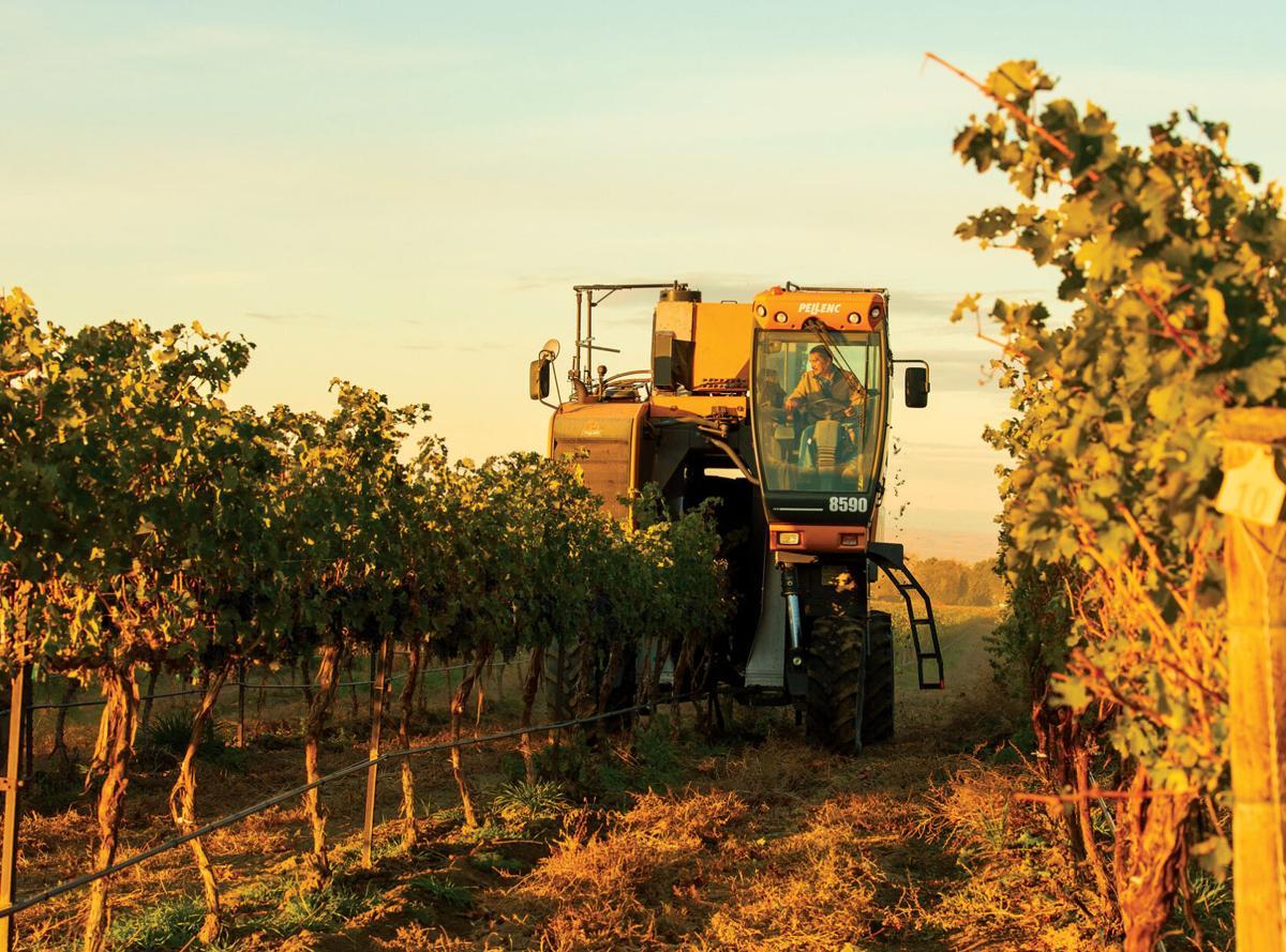 10_28_Airfield Estate Winery_Machine Harvest WS_COPY_PWS2576.jpg