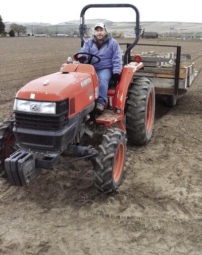 Asparagus growers face labor shortage