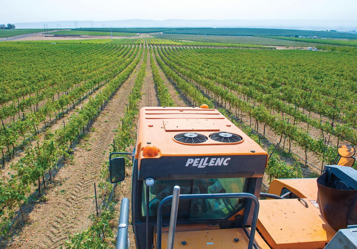 LOWER VALLEY WINE HARVESTING OPERATIONS