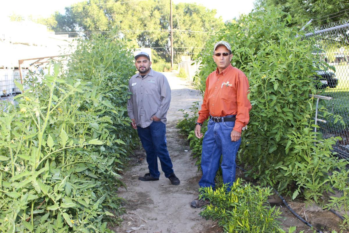 Company allows men small garden plot