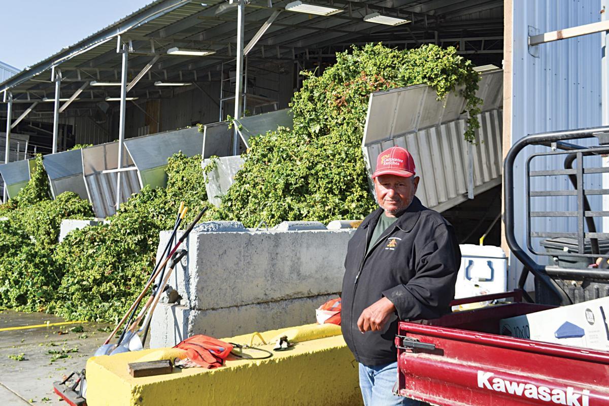 Jose Torres starts 53rd season of hop harvest