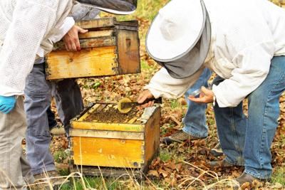 Honey bees saved by fungus?