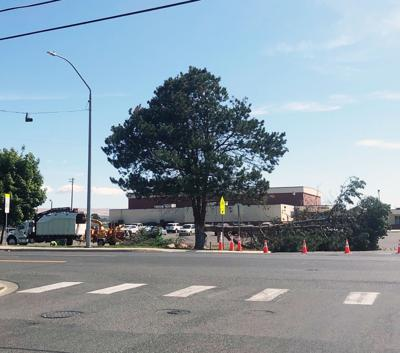 MORE TREES REMOVED
